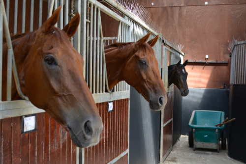 3 horses in stable